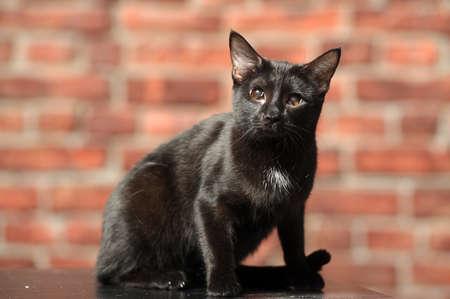 moggi: Black Cat with sick eyes
