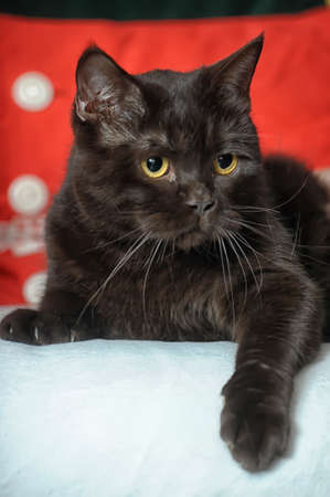 Black cat on a red Stock Photo - 17138677