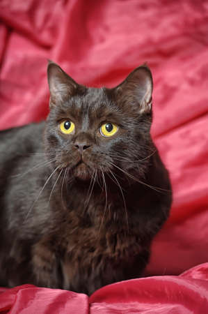 Black cat on a red Stock Photo - 17138666