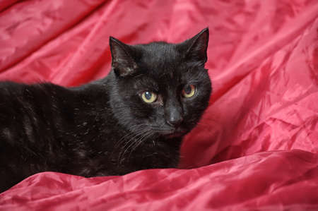 Black cat on a red  photo