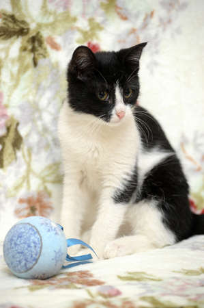 black and white kitten and Christmas Stock Photo - 17085436