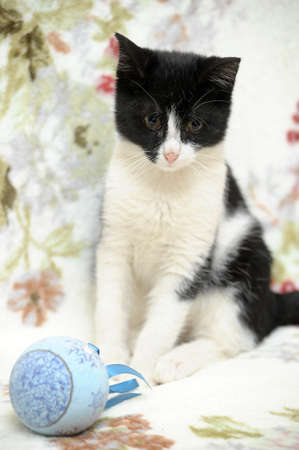 black and white kitten and Christmas Stock Photo - 17085429