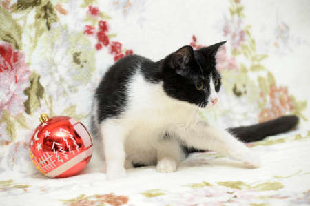 black and white kitten and Christmas Stock Photo - 17085433