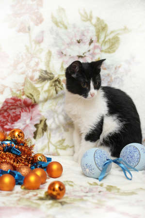 black and white kitten and Christmas photo