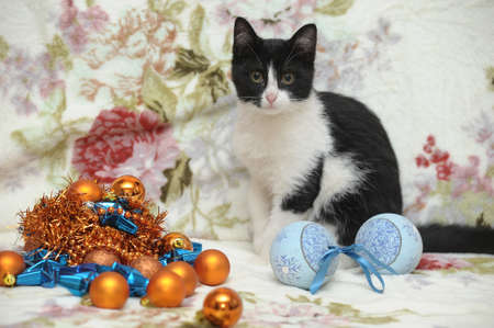 black and white kitten and Christmas Stock Photo - 17085466