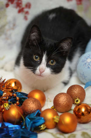 black and white kitten and Christmas Stock Photo - 17085469