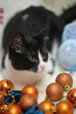 black and white kitten and Christmas Stock Photo - 17085460