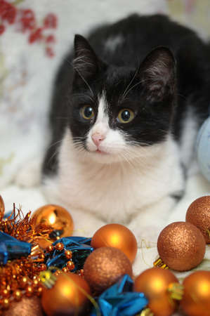 black and white kitten and Christmas Stock Photo - 17085455