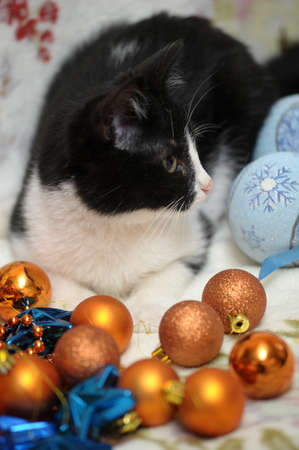 black and white kitten and Christmas Stock Photo - 17085452
