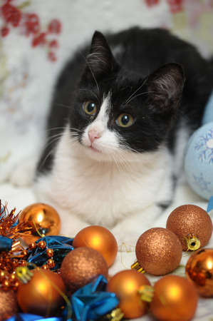 black and white kitten and Christmas balls photo