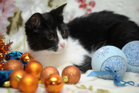 black and white kitten and Christmas balls Stock Photo - 17085449