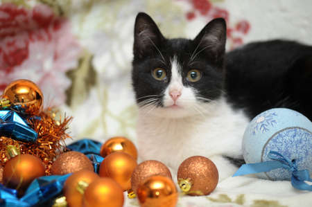 black and white kitten and Christmas balls Stock Photo - 17085465