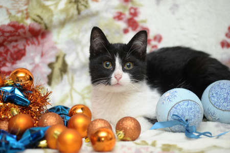 black and white kitten and Christmas Stock Photo - 17085457
