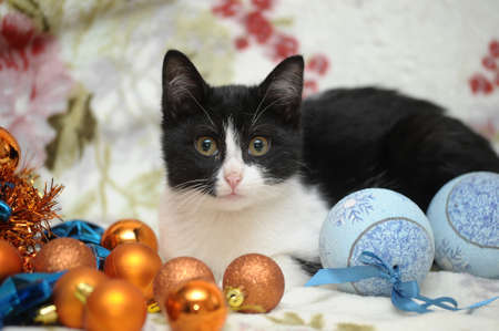 black and white kitten and Christmas Stock Photo - 17085454