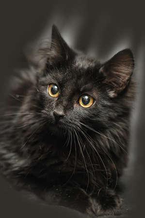 beautiful portrait of a black kitten on black background Stock Photo - 17976114