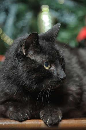 artificial lights: black cat Stock Photo