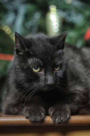 pat down: black cat Stock Photo