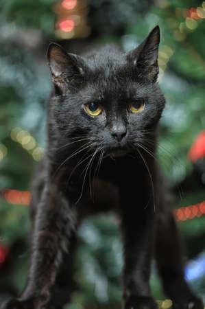 pat down: black cat