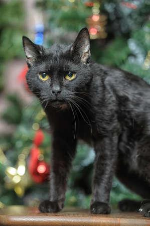 black cat  Stock Photo - 17138995