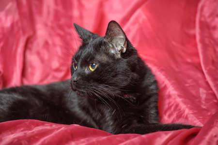 black cat on a red background Stock Photo - 17107385
