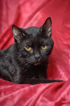 black cat on a red background Stock Photo - 17107412