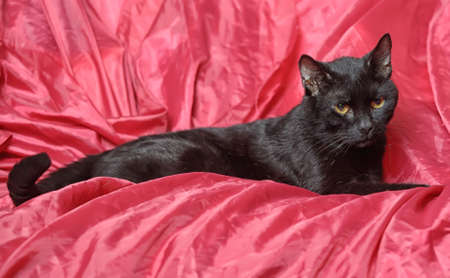 black cat on a red background Stock Photo - 17107311