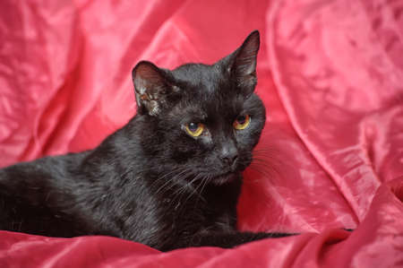 black cat on a red background Stock Photo - 17107389