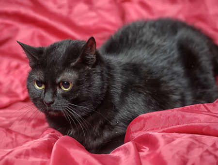 black cat on a red background Stock Photo - 17107314