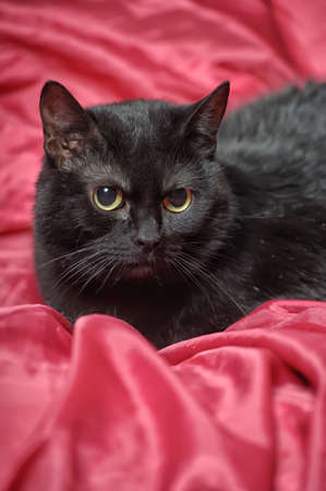 black cat on a red background Stock Photo - 17107410