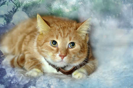 ginger and white cat Stock Photo - 17107443