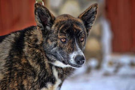 dogie: A cute mongrel dog