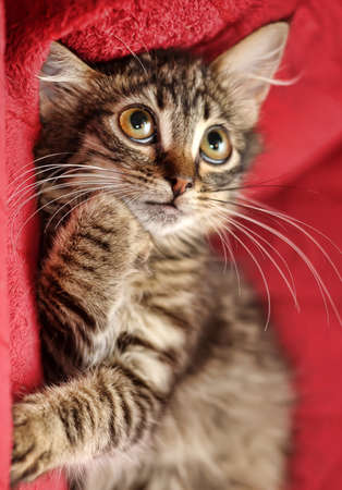 fluffy cute tabby kitten photo