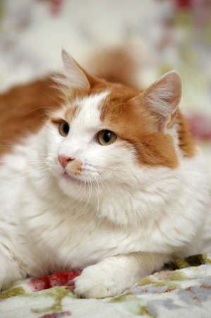 white with a red cat in the house Stock Photo - 17268394