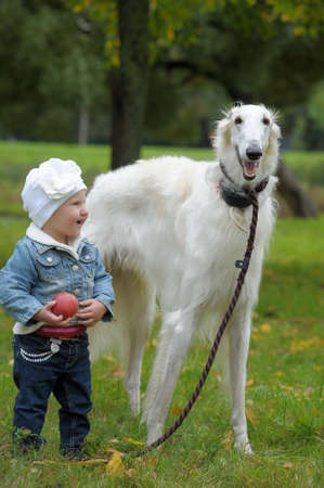 Russian wolfhound and a small child photo