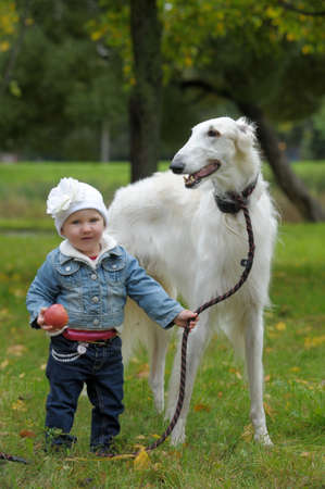 Russian wolfhound and a small child Stock Photo - 17330991
