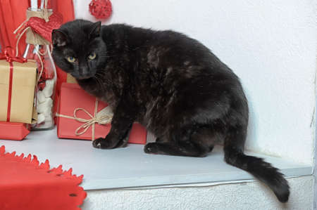 black Cat Stock Photo - 17934340