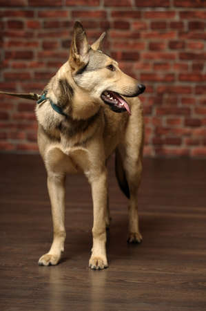young mongrel dog photo
