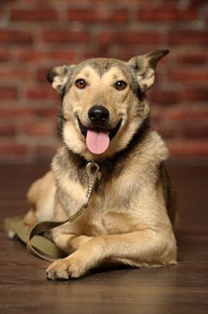 9 months old: Primer plano de perro de raza mixta, 9 meses de edad