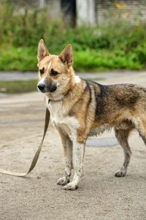 mongrel dog Stock Photo - 17377011