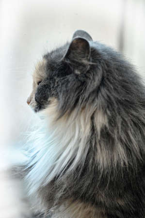 beautiful fluffy cat photo