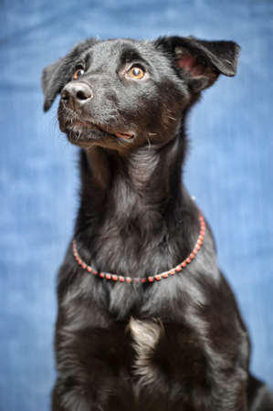 black puppy Stock Photo - 17502456