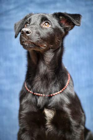 black puppy Stock Photo - 17502456