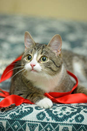 Tabby cat playing on the couch with a red ribbon photo