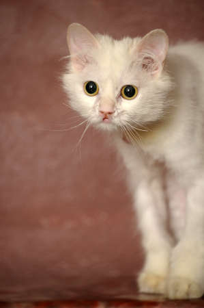 white sick cat Stock Photo - 18849051