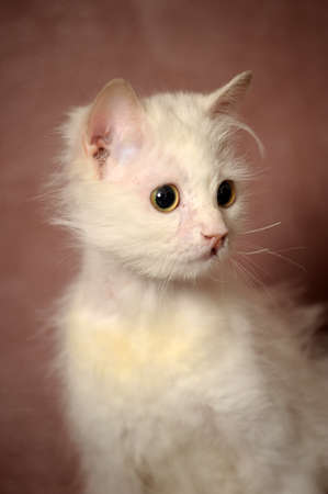 white sick cat Stock Photo - 18849053