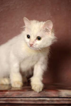 white sick cat Stock Photo - 18849049