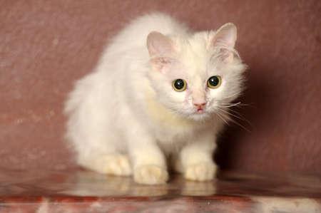 watery: white sick cat