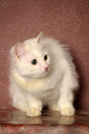 white sick cat Stock Photo - 18849050
