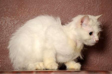 white sick cat Stock Photo - 18849054
