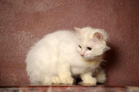 white sick cat Stock Photo - 18849052